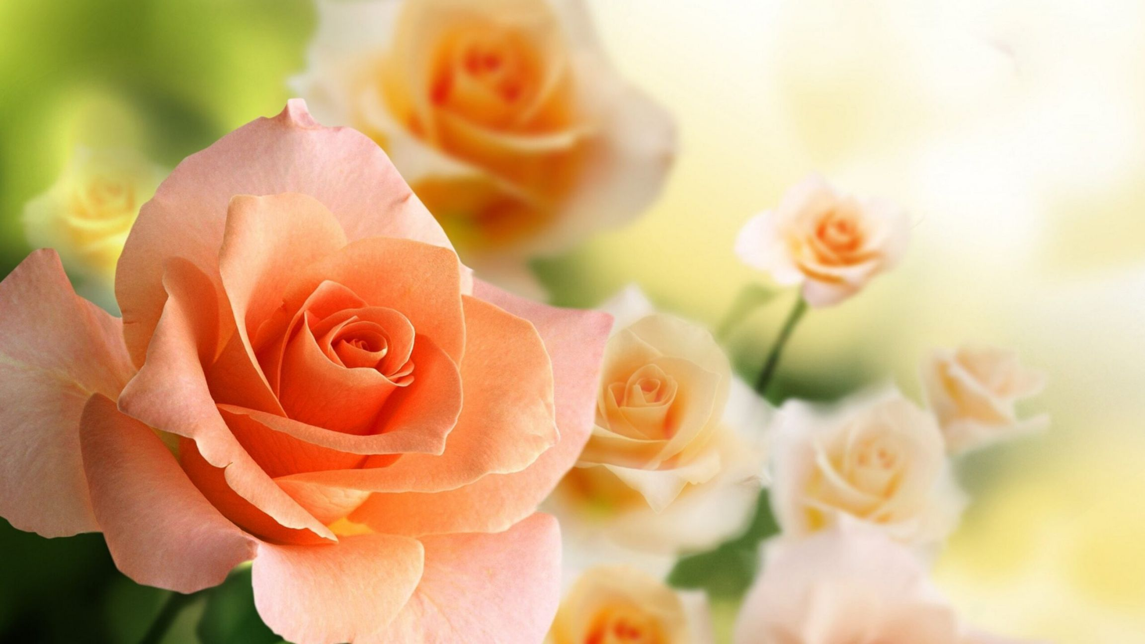flower rose wallpaper