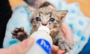 tips kitten raising guide